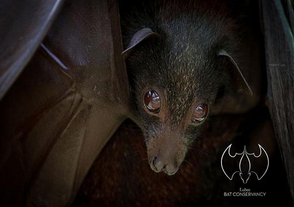 lubee bat conservatory